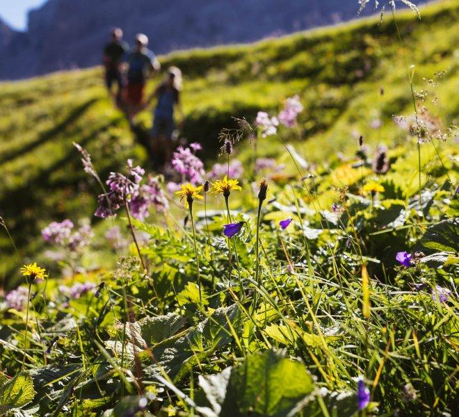 Almwiesen Sommerurlaub